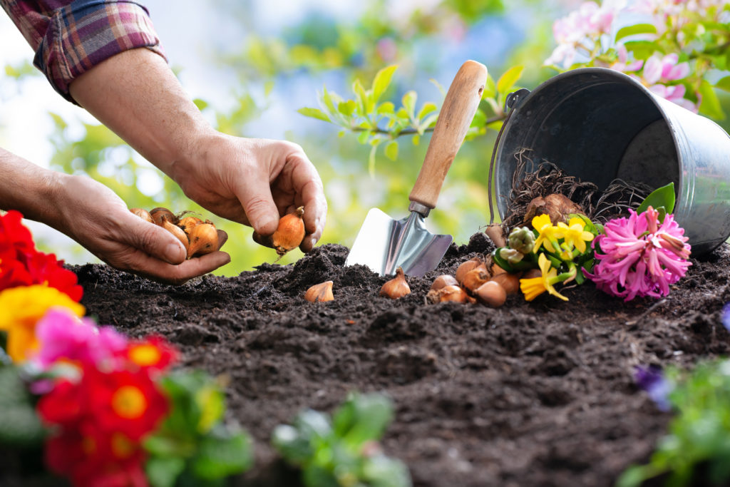 landscaping maintenance to ensure a healthy yard