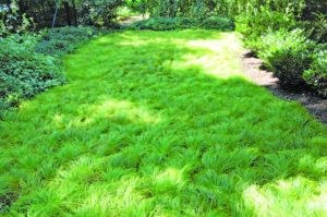 Green Mulch - The Many Benefits In & Around the Garden