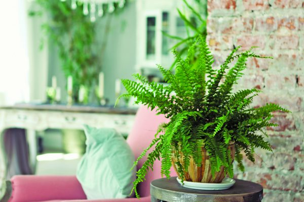 Planting Fresh Ideas Indoors - Decorating with Houseplants